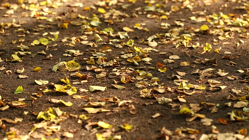 Autumn leaves on the ground (dolly shot) | Shutterstock HD Video #6564140