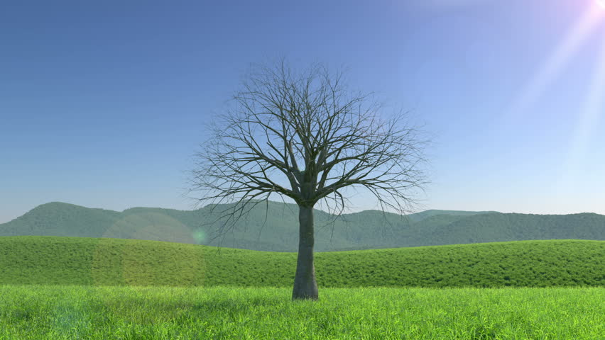 A tree passing through the four seasons, Seamless Loop