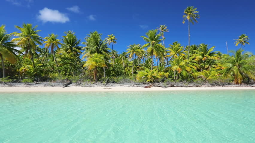 Tropical island, Palm Trees and White Sand | Shutterstock HD Video #6657980