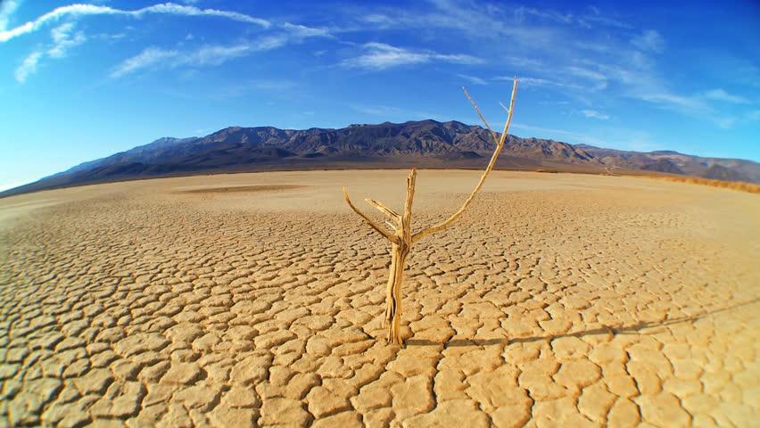 Petrified tree in barren environmental wilderness | Shutterstock HD Video #671920