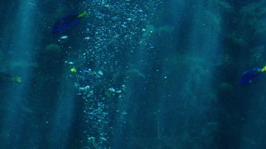 Sunlight in Tropical Ocean 03 Underwater Marine Life Shark   Shutterstock HD Video #6741880