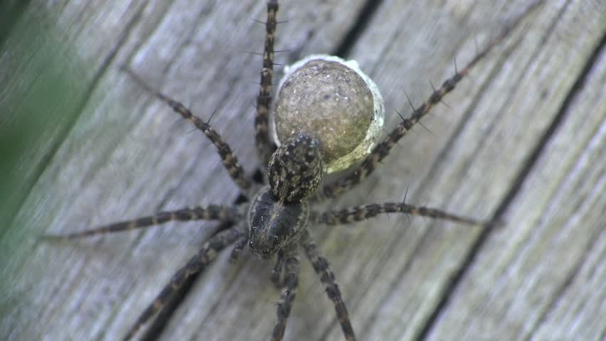 Spider insect macro wood background | Shutterstock HD Video #6766090