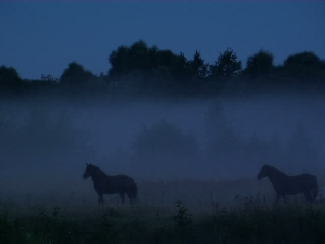 Horses in a fog | Shutterstock HD Video #717289