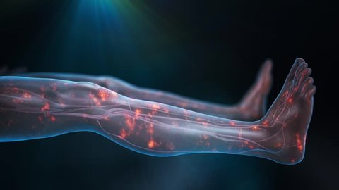 Legs in supine position with transparent skin showing the cardiovascular system and nerve pulses as red glowing particles in the legs with a dark blue background and light shining from top center