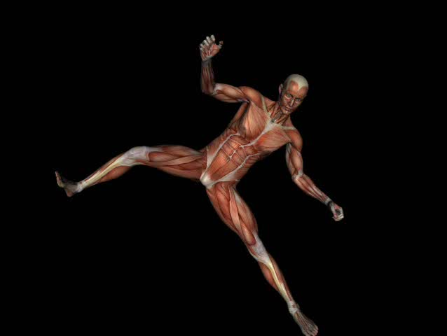 running muscular man with visible muscles in loop with alpha, Muscles