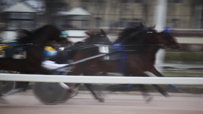 jockeys in carts harnessed of horses, quickly move on hippodrome path