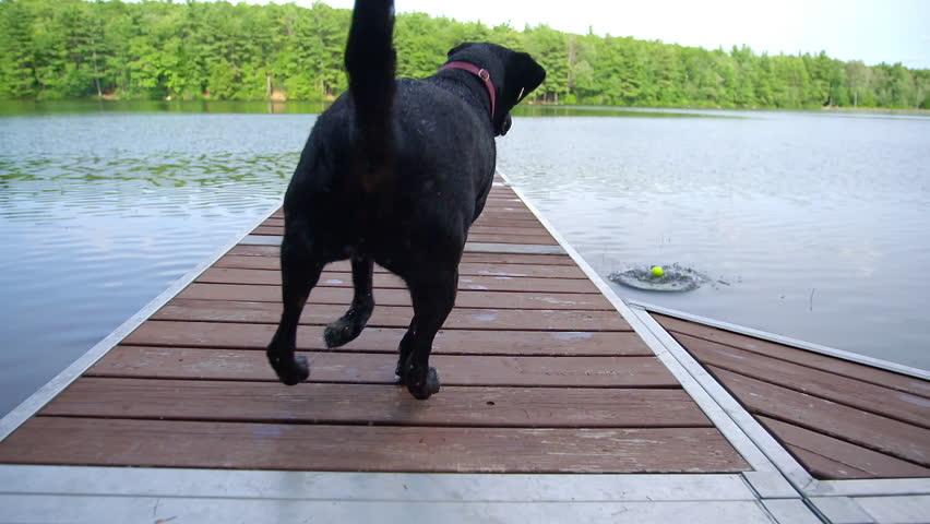 Black dog jumping off dock into pond in slow motion with a big splash