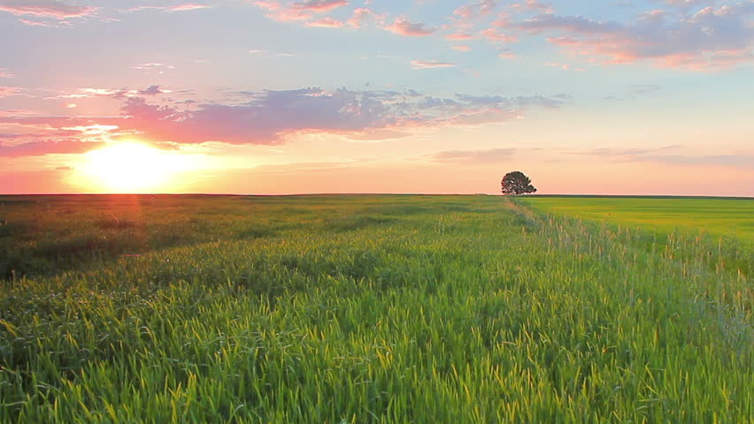 grass field sunrise. Interesting Field Stock Video Of The Wheat Cereal Grass Field With  7406260 Shutterstock Inside Grass Field Sunrise