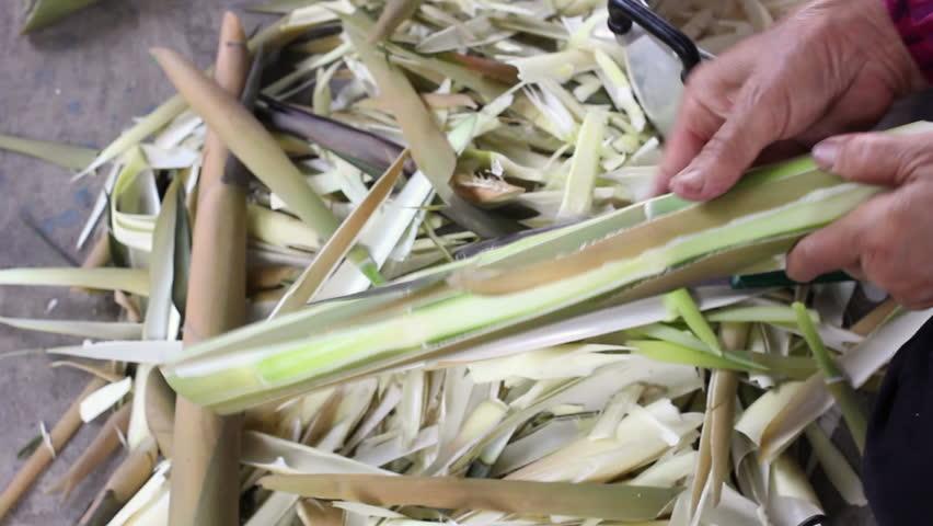 Header of bamboo shoot