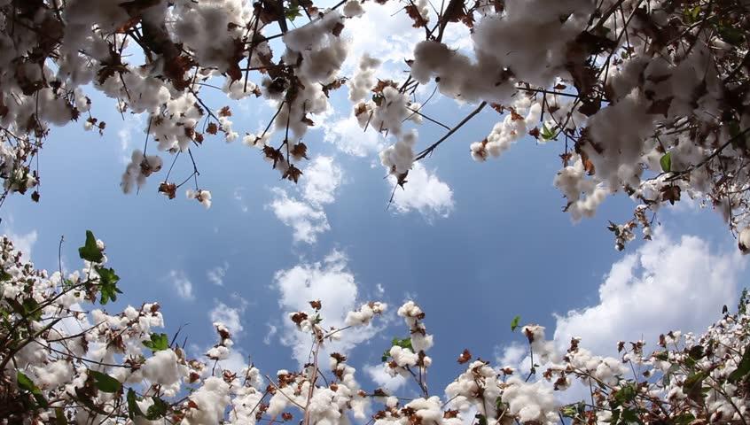 Header of cotton