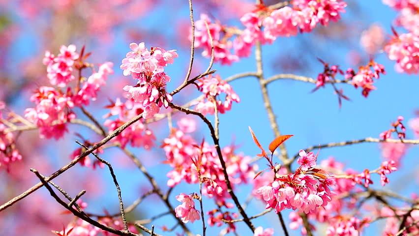 Unusual spring floral kaleidoscopic pattern stock footage video 100 unusual spring floral kaleidoscopic pattern stock footage video 100 royalty free 15736120 shutterstock mightylinksfo
