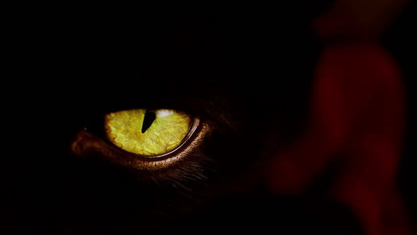 The evil eyes blinking carnivorous animal watching from - Scary yellow eyes ...