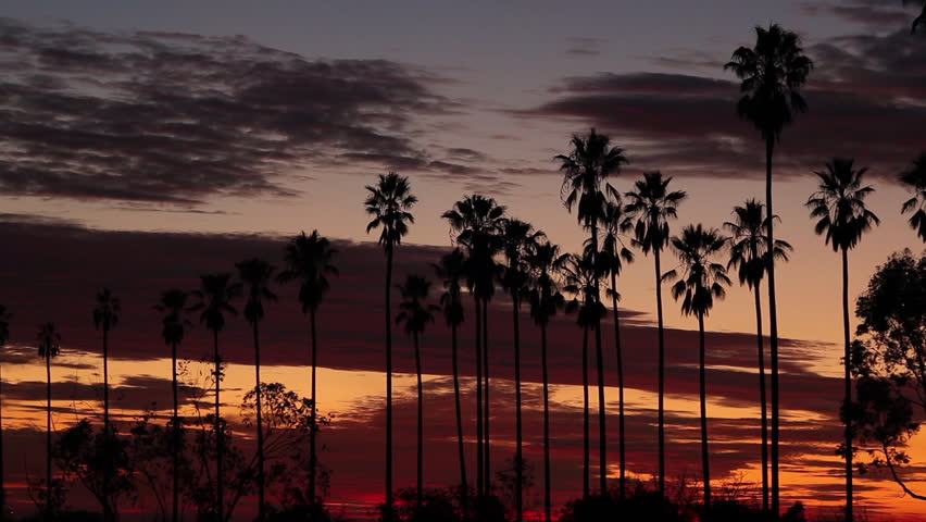 Static shot of a line of silhouetted palm trees and colorful sunset clouds in Los Angeles, California | Shutterstock HD Video #7747630