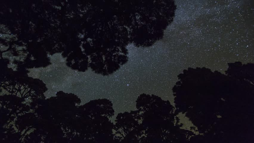 Milky Way with trees on isla de La Palma, Canary Islands, Spain. Timelapse footage. #7775050