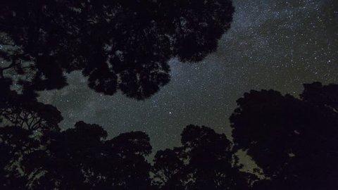 Milky Way with trees on isla de La Palma, Canary Islands, Spain. Timelapse footage.