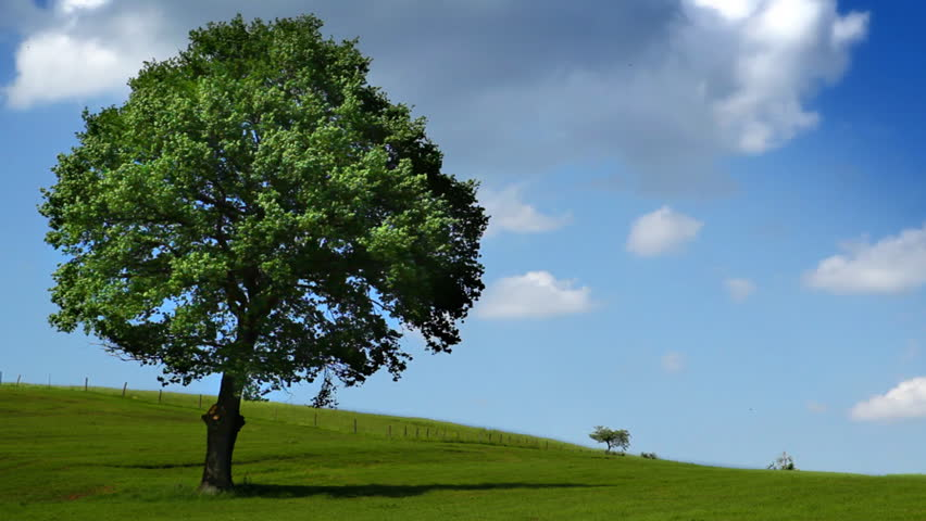 tree on field - windy - cloudy sky