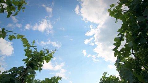 Timelapse Lavaux Switzerland Clouds Vineyard Timelapse of clouds moving fast on a vineyard