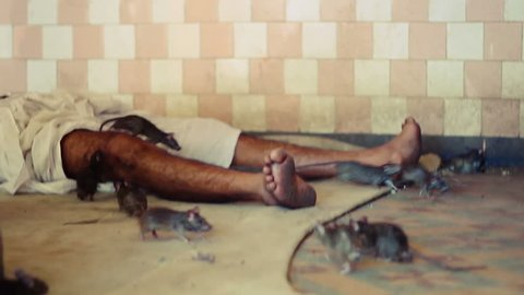 Man sleeping among rats.