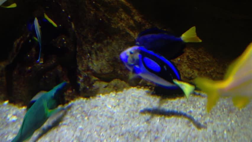 Sea fishes in marine aquarium