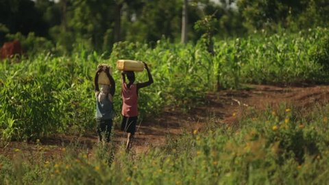 Two African girls walking through a field carrying water on their heads