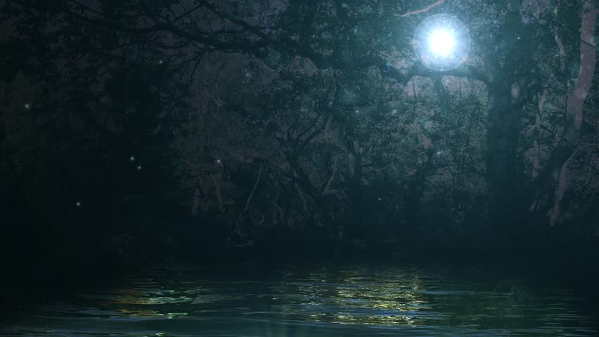 Enchanted Forest Background Stock Footage Video 8161654 | Shutterstock