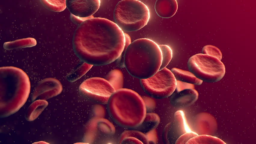Blood cells (cg animation full hd)