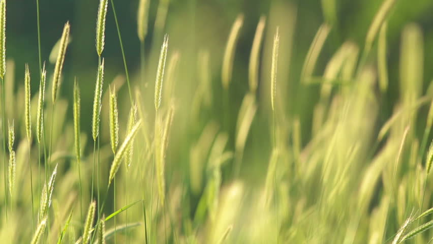 Hdr background stock footage video shutterstock blurred grass with green field and mountain background hdr shot altavistaventures Gallery