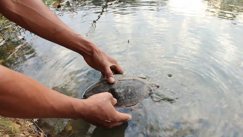 Turtle released into the water back to nature.