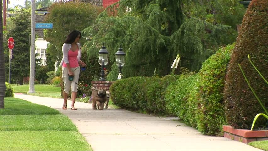 Young woman walking dogs in neighborhood