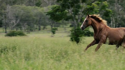 Horses galloping in the outback
