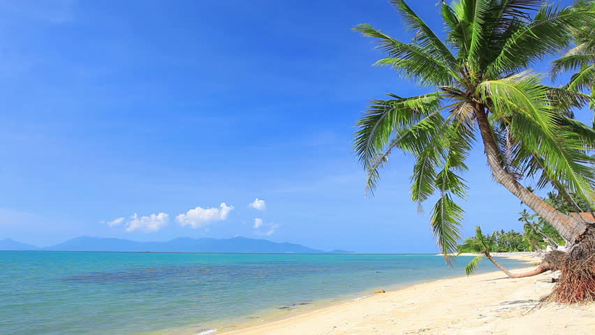 Tropical beach and palm tree | Shutterstock HD Video #8852380