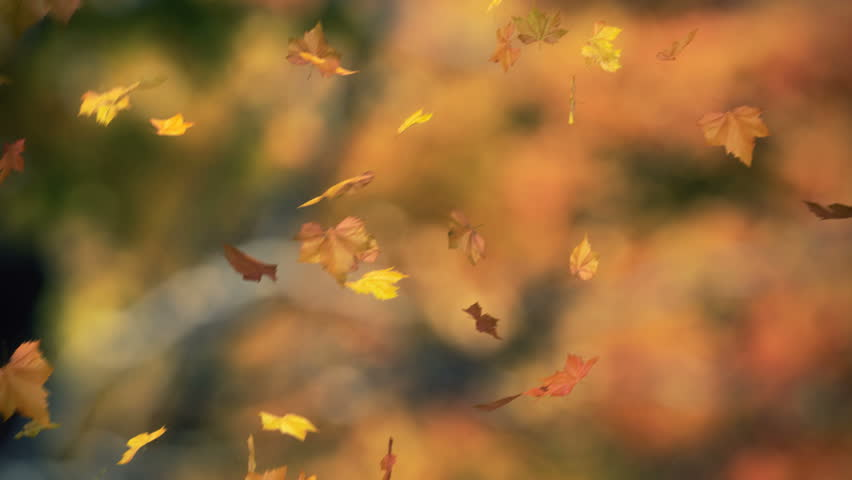 falling leaves 03 - looped and masked
