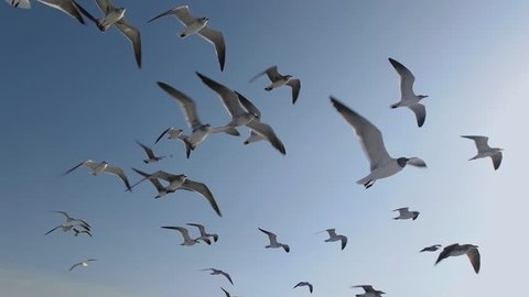 Flock of Seagulls And Birds Flying High In The Sky. Super Slow Motion 120p