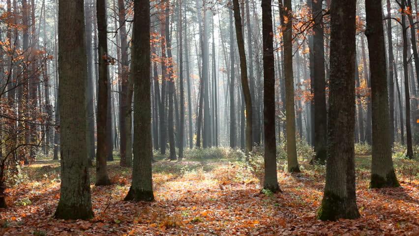 Autumn forest  #925090