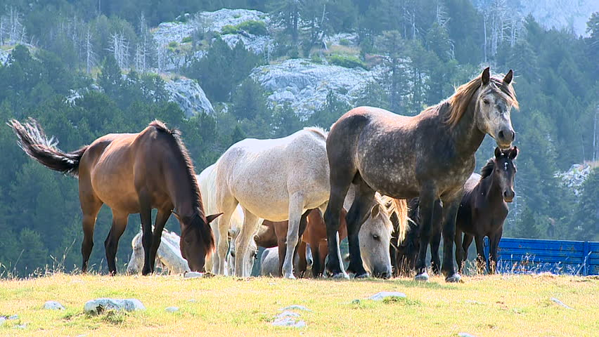 Horses graze on the pastures at mountain village | Shutterstock HD Video #9255137