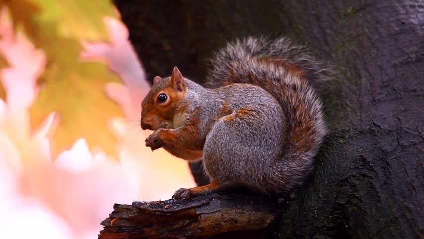 Squirrel in Autumn #946705