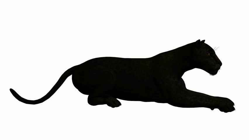 black jaguar running on a white background stock footage video rh shutterstock com Jaguar Animal Clip Art Black Jaguar Logo