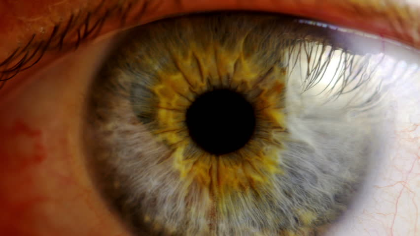 Human eye iris contracting. Extreme close up. #9569450