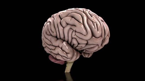 Analyzing the human brain dynamic loop black Conceptual animation showing the analysis of the human brain. Seamless loop on black background.