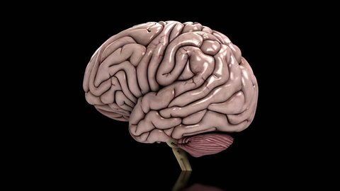 Analyzing the human brain slow loop black Conceptual animation showing the analysis of the human brain. Seamless loop on black background.