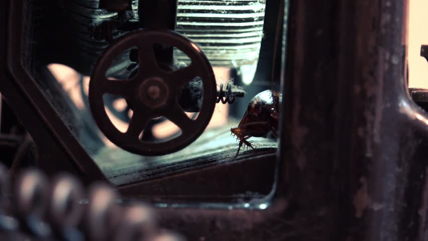 Massive american cockroach, Periplaneta americana, hidden in an old and dusty mechanisms typewriters, real time, 4k, uhd,ultra hd, close up | Shutterstock HD Video #9748820
