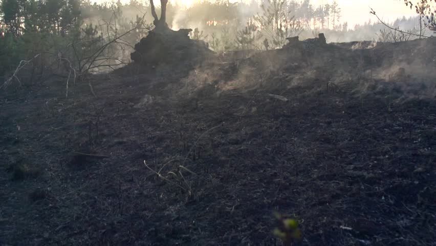 Forest fire. Fire in a wood. Disastrous consequences of forest fires. Mysterious spooky dark landscape background. Full HD video footage 1080p. Slow motion 240 fps. High speed camera shot