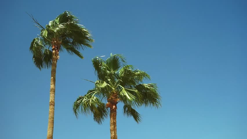 Palm trees against blue sky, dates fruit tree at summer time, paradise relax background. | Shutterstock HD Video #9969800
